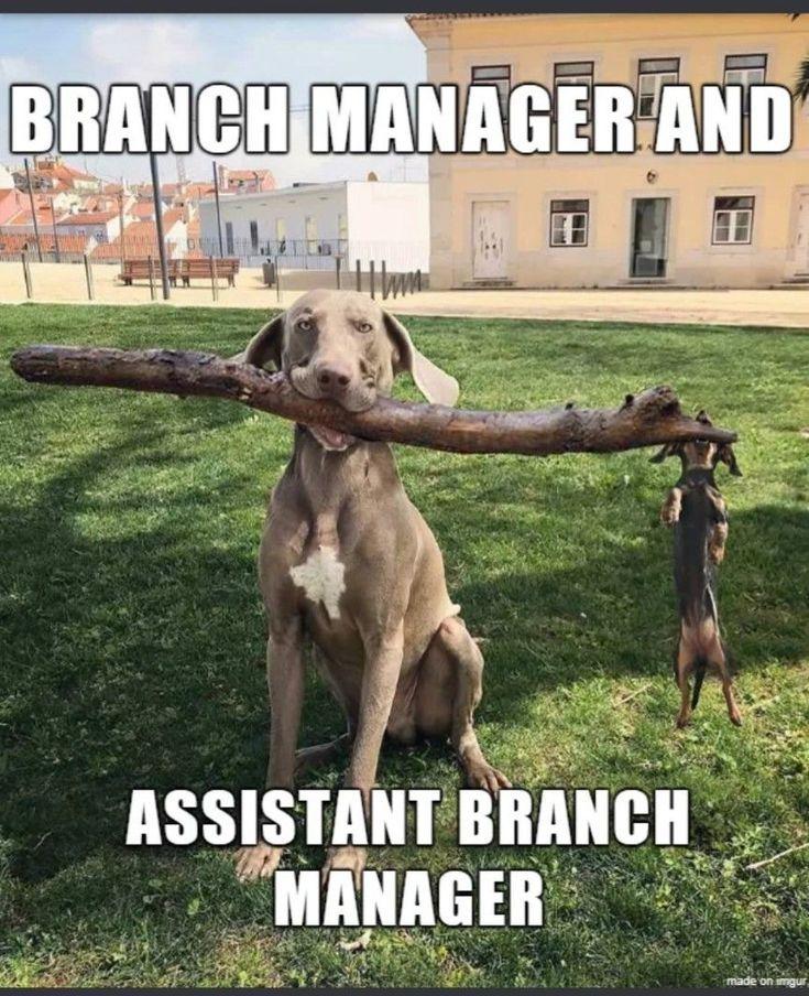 Pet Perks at Work